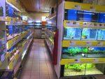 Blick auf Aquarienanlage
