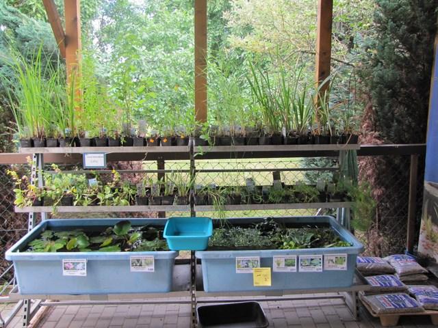 Teichpflanzen Verkaufsanlage
