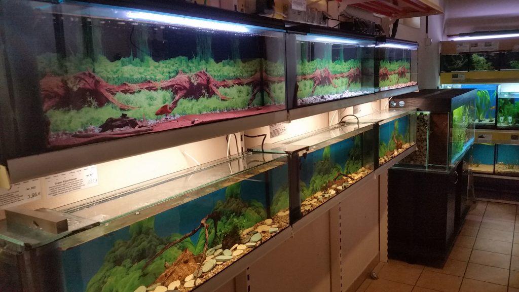 Aquarienschneckenanlage